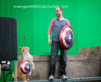 avengers with cats